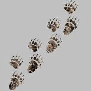 bear track tattoo designs - Bing Images