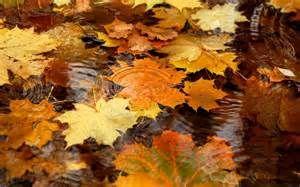 Autumn Desktop Wallpaper Screensaver - Bing Images