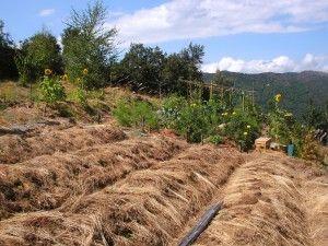 Jardiner en climat méditerranéen par Léa Cambien                                                                                                                                                                                 Plus
