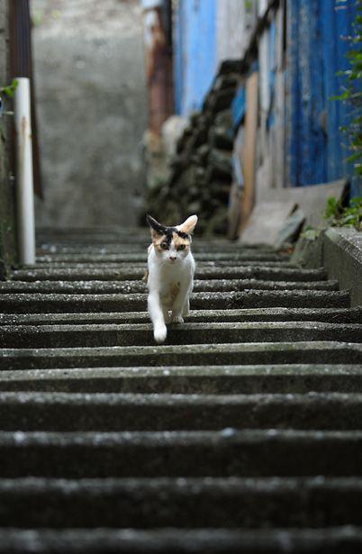 路地裏と猫