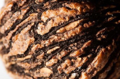 10 Black Walnut Benefits for Better Health