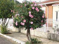 árvores-calçada-pequeno-porte