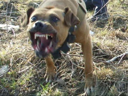 В Петровском районе Ставрополья собаки насмерть загрызли ребенка