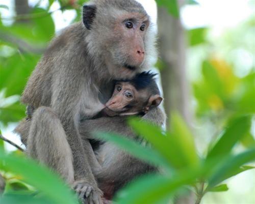 Can Gio Mangrove Forest, Vam Sat eco tourist area - From Saigon day trip. Animal Circus with monkeys etc, salt water crocodile fishing, bat lagoon..Vietnam