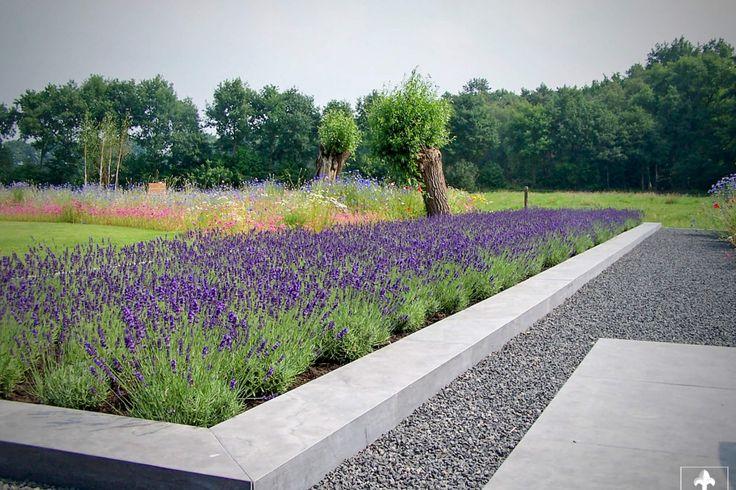 Moderne tuin met grote lavendel border, omkaderd met een verhoogde hardstenen rand. Midden in het landschap de Utrechtse heuvelrug