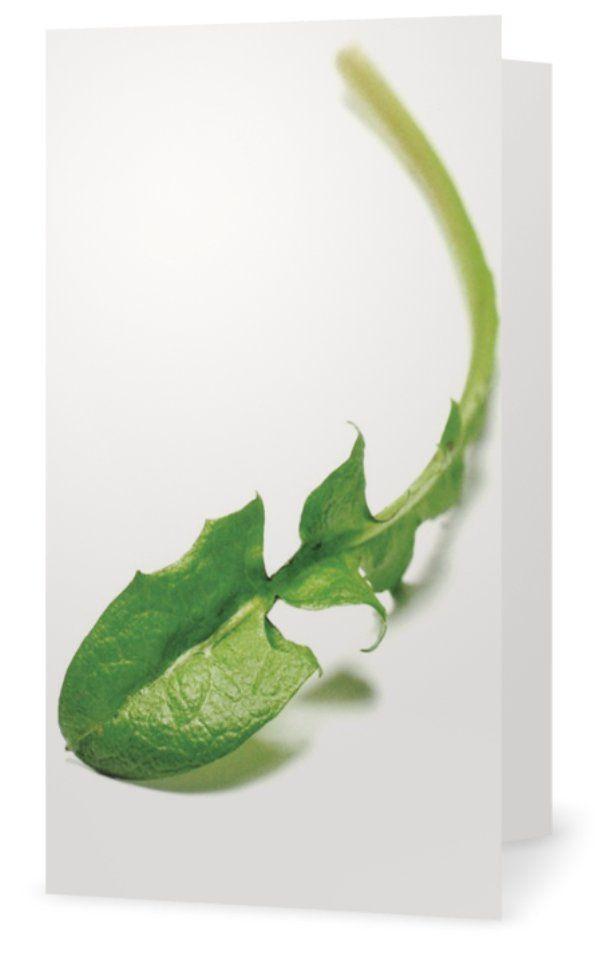 Dandelion, Maskrosblad. Cards for florists. Gift card for flower arrangements. Scandinavian design. Jäderberg & Co.