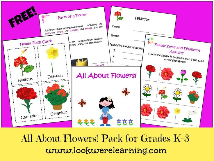 Flowers with Pictures for Kids