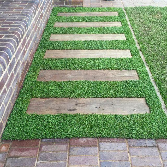 33 Best Dichondra Lawn Images On Pinterest Gardens
