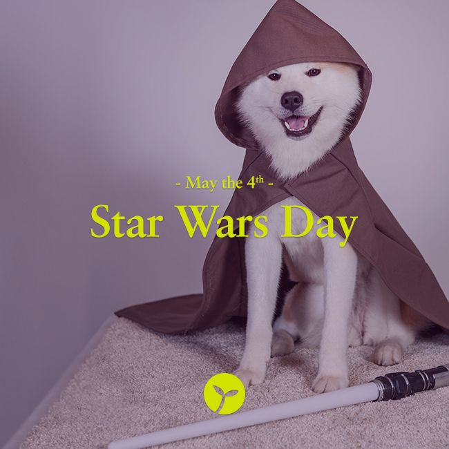 The result of a common pun on the phrase 'may the force be with you', May 4th has become commonly accepted known and loved as Star Wars Day. #bizarre #unique #holiday #holidays #sprout #freedomtogrow #may4th #startwarsday #starwars #maytheforce