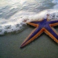 Sea and Sand and Starfish