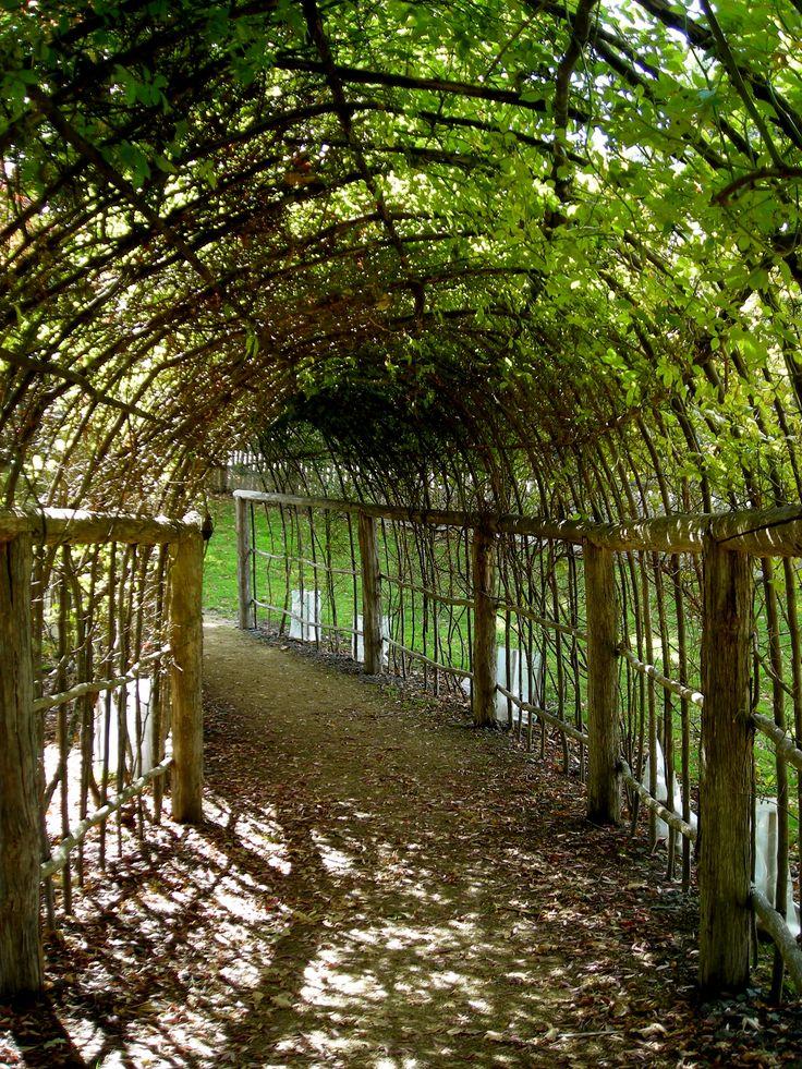 35 Best Grape Trellis Images On Pinterest Grape Arbor 400 x 300