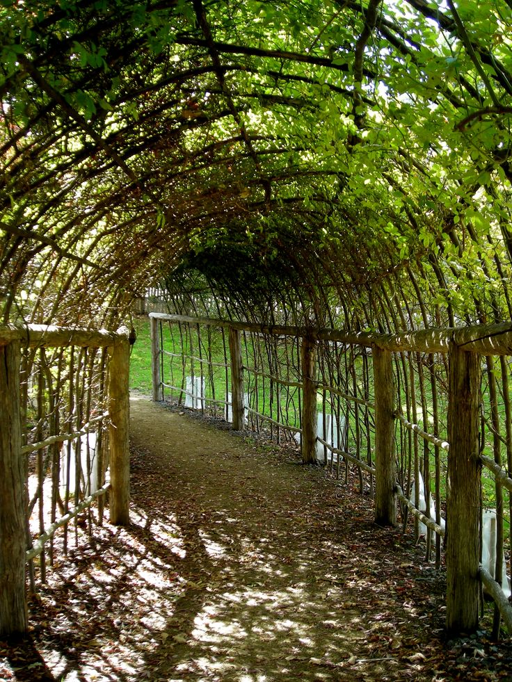 35 Best Images About Grape Trellis On Pinterest Cable