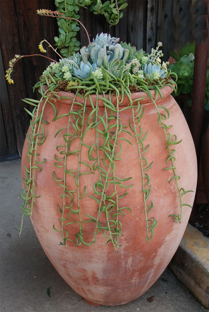 lovely terra cotta pot with succulents