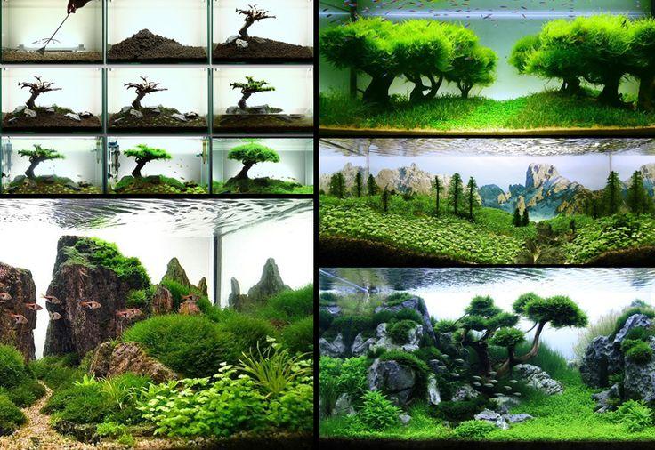 Paisajismo acuático es el arte de arreglar las plantas acuáticas, así como rocas, piedras, cavework, o trozos de madera, de una manera estética y satisfech