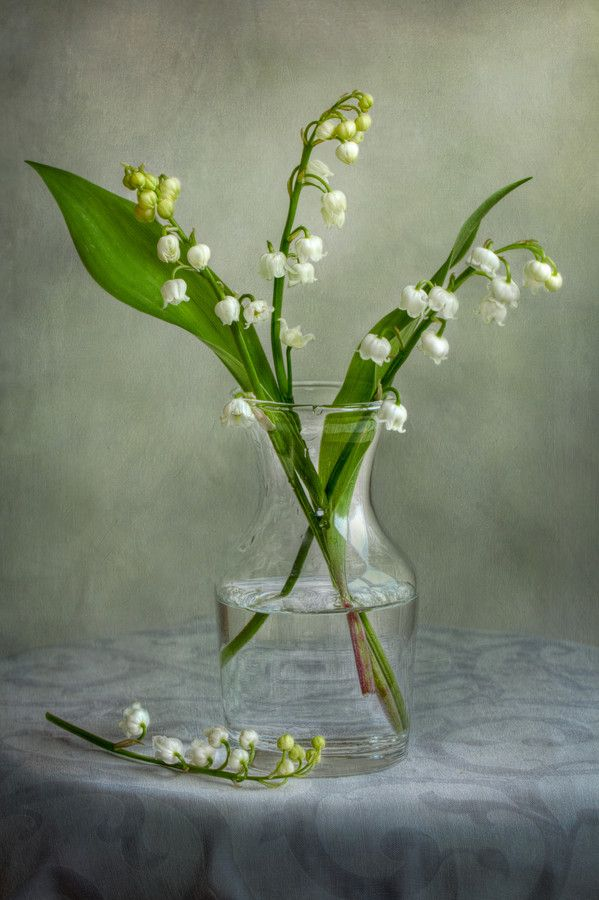 """Lily of the valley"" by Mandy Disher"