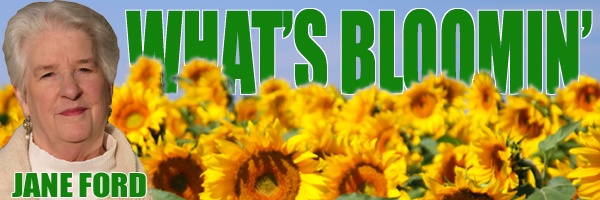What's Bloomin': Use Plastic Milk Jugs & Liter Bottles For The Garden