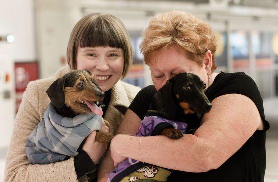 Korean Puppy Mill Rescues Arrive in Toronto https://www.freekoreandogs.org/korean-puppy-mill-rescues-arrive-toronto/