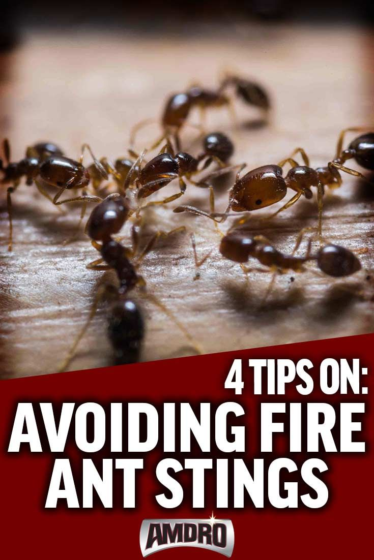 The best way to avoid painful fire ant bites and stings when enjoying the outdoors is by learning to avoid them.