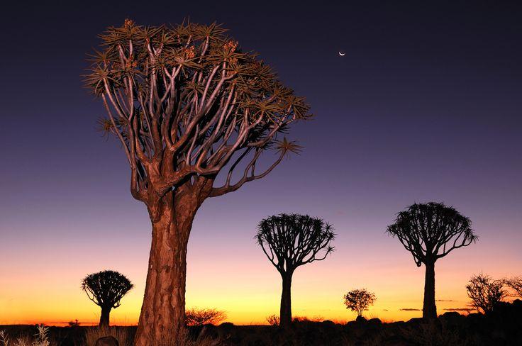 Sunset at Quiver Tree Forest, Keetmanshoop, Karas Region, Namibia