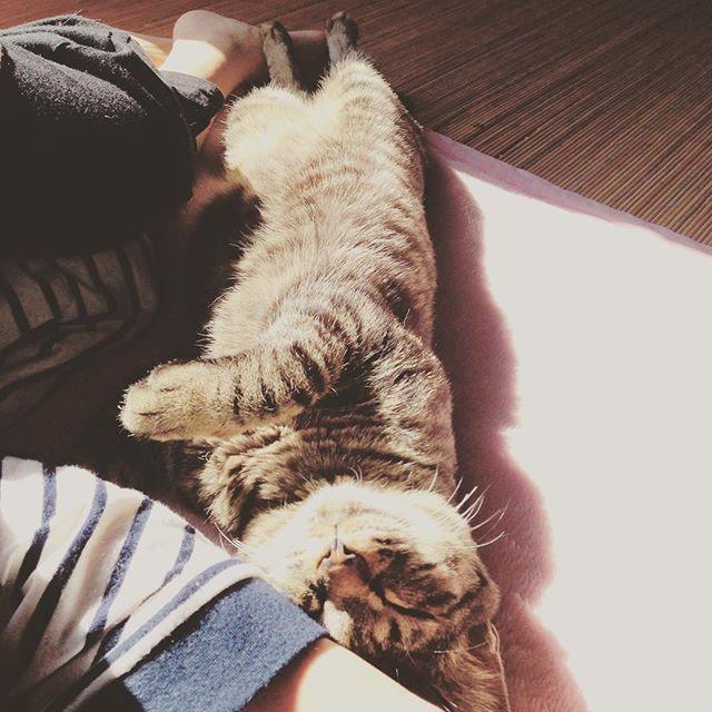 #日向ぼっこ #添い寝 #可愛すぎ #愛猫 #猫 ネコ #cat #小鉄くん # #maaa_342016/02/26 17:45:16