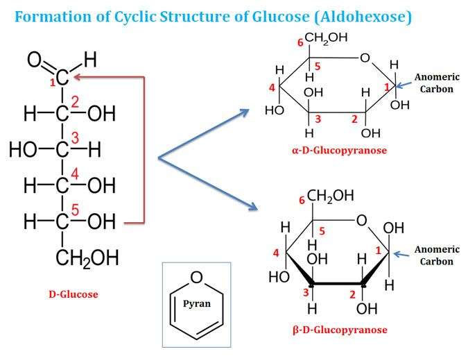 Glucose Cyclic Structure Chemistry Textbook Teaching Chemistry Lectures Notes