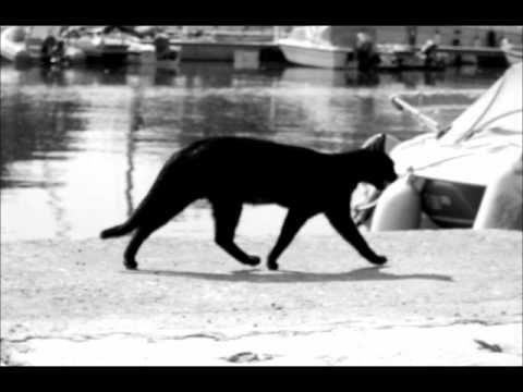 Pasărea Colibri - Pisica neagră