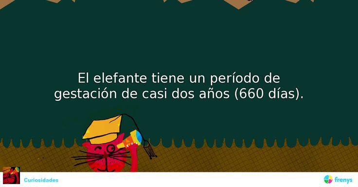 El elefante tiene un período de gestación de casi dos años (660 días).  #sabiasque #hechos