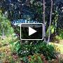 Amazon Animal Rescue Center Slideshow & Video | TripAdvisor™