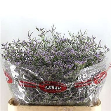 Limonium Skylight is perfect for flower arrangements for weddings and events! Creates a rustic country styled wedding! Head over to ww.trianglenursery.co.uk for more information! Great wholesale prices!