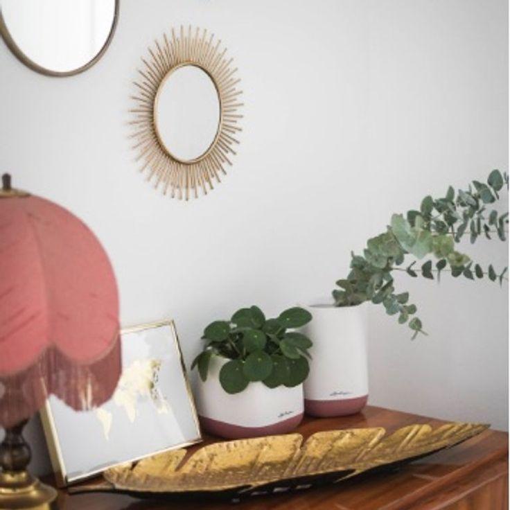Quelle plante avoir dans la chambre d co plante chambre plante interieur et d coration - Plante dans la chambre ...