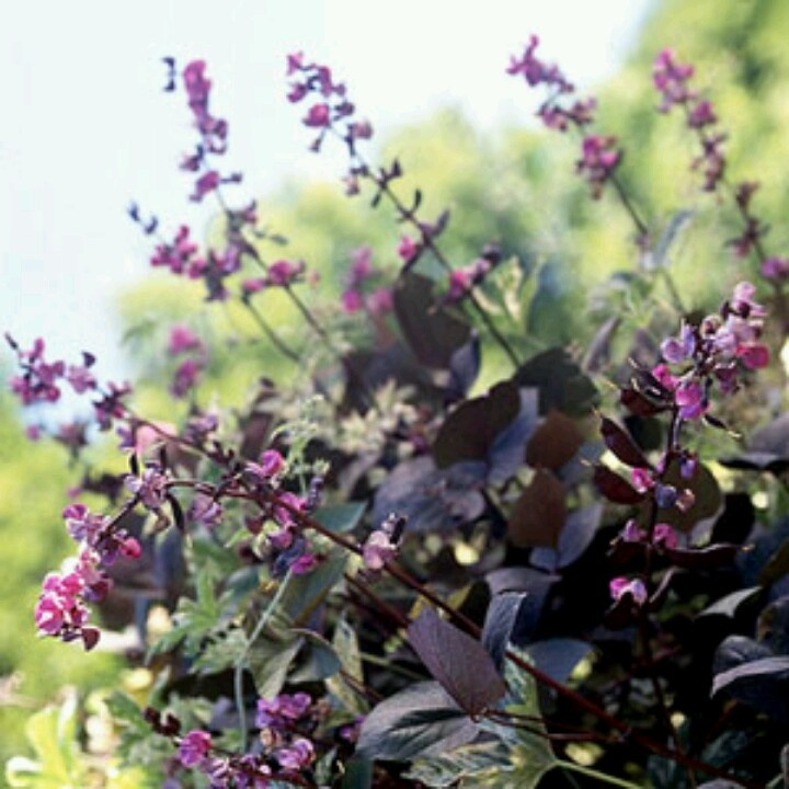 6 Plants Thomas Jefferson Grew That You Can Grow Today  |Thomas Jefferson Garden Seeds