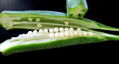 Treat Diabetes, Asthma, Cholesterol And Kidney Diseases With Okra Water- Now You Can Make It Yourself