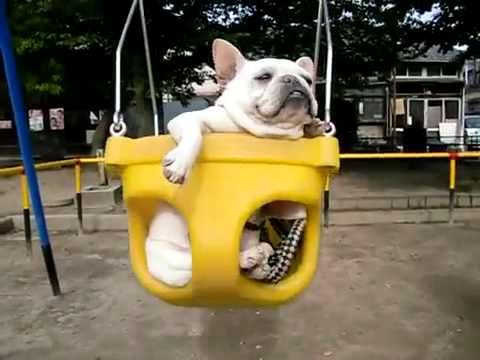 Guiney and Olive are jealous! Swinging Bulldogs...