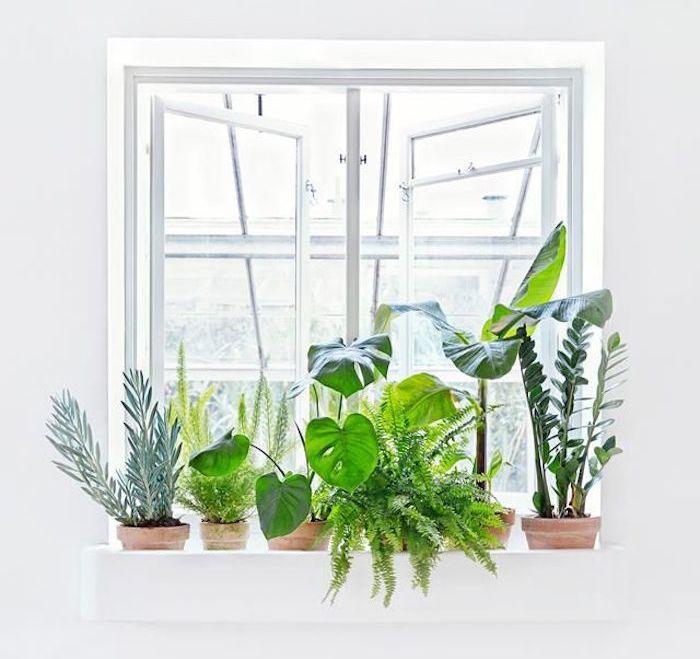 Les 25 meilleures id es concernant plantes d polluantes - Plantes interieur depolluante ...