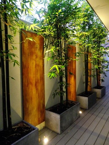 Bamboo in pots great green screen ideas by Ascher Smith Landscape Designs