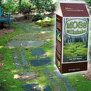 My milkshake brings all the boys to the yard ;)  Moss Milkshake makes it fun and easy to create a moss garden. Perfect for shady spots, moss is environmentally friendly and requires no mowing, chemicals, or watering once established. Carton contains dry moss fragments with growth stimulants and water retention gel powder. Just add water, then apply to bare soil, stone or concrete.