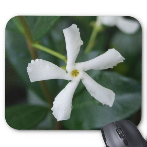 Star Jasmine Mousepad