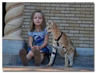 Savanna cat... My next pet!