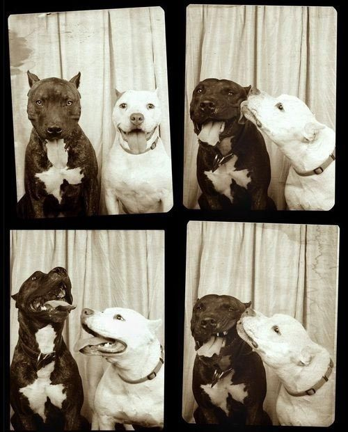 Doggy-booth.