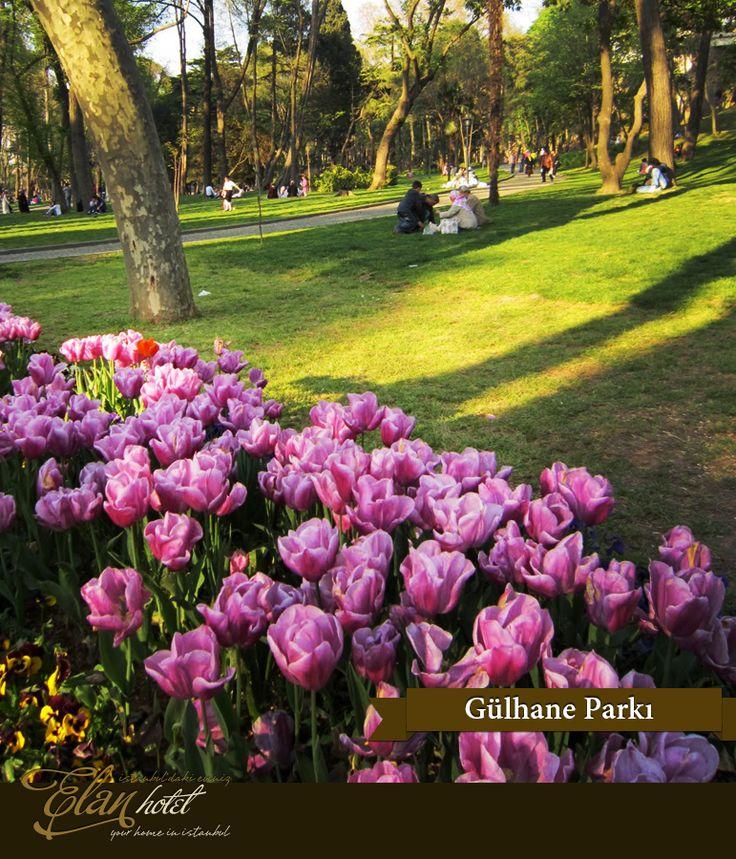 Lale festivali kapsamında Gülhane Parkı'na 68 farklı türde 1.316.000 lale dikildi :) #elanhotelistanbul #istanbul #tulip #lale #gulhaneparki #Turkey #Turkiye