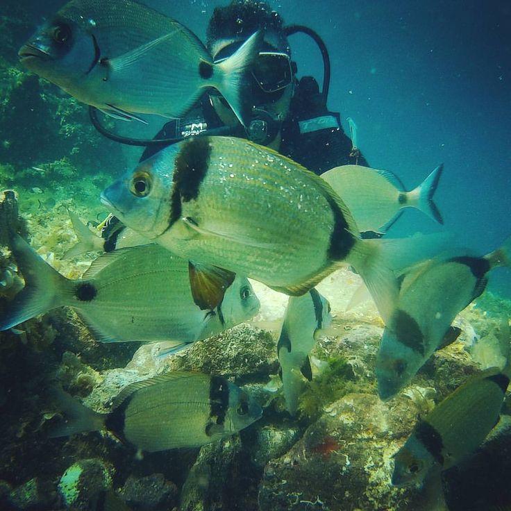 #denemedalisi #koraygerce #cunda #ayvalikdalis #daliskursu #dalışzamanı #trydive #diving #badavut www.ayvalik3sea.com (Ayvalik 3 sea dalış merkezi)