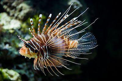Peixes Mais Bonitos do Mundo - Aquário Marinho