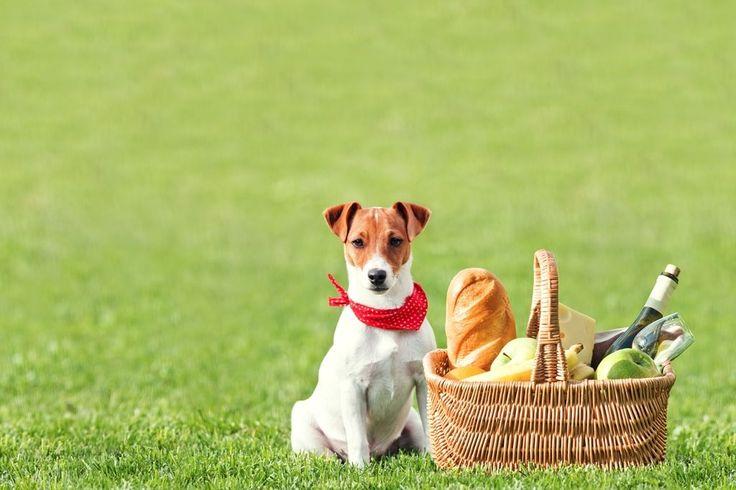 """Джек-Рассел терьер (фото) - жизнерадостная порода собаки из фильма """"Маска"""""""