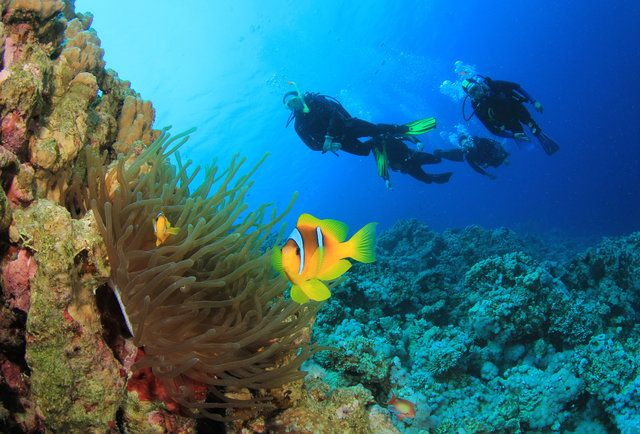 The 11 Best Scuba Diving Spots in the World