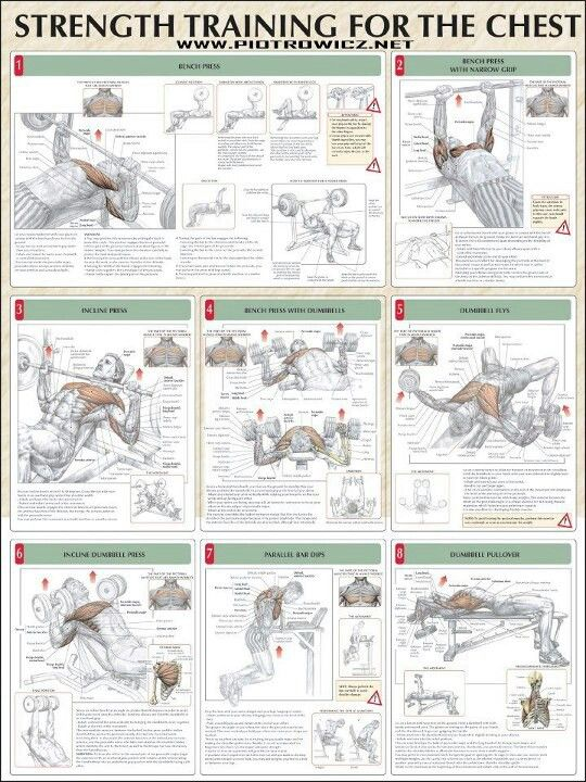 Chest Workout workouts For men Exercise Is The Way
