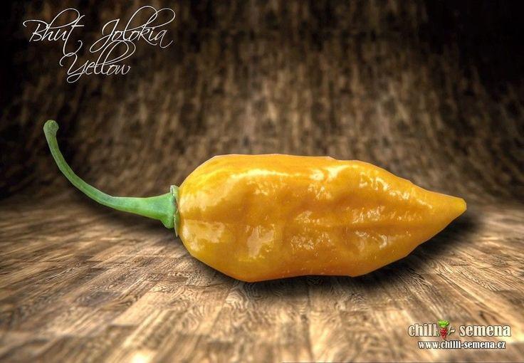Chilli semena - Bhut Jolokia Yellow