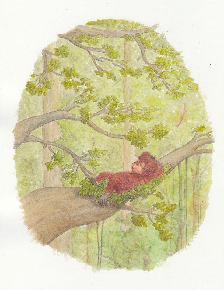#watercolor #watercolour #orangutan #sumatera #childrensbook
