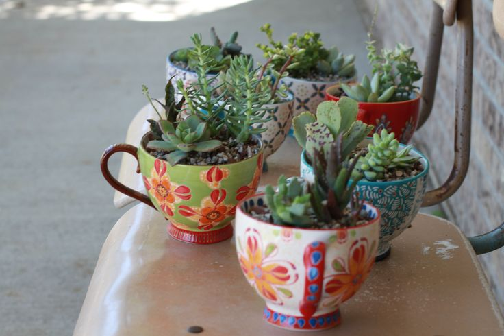 Pinterest project- succulent hostess gifts | whatsarahfound