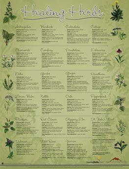 Healing herbs poster.