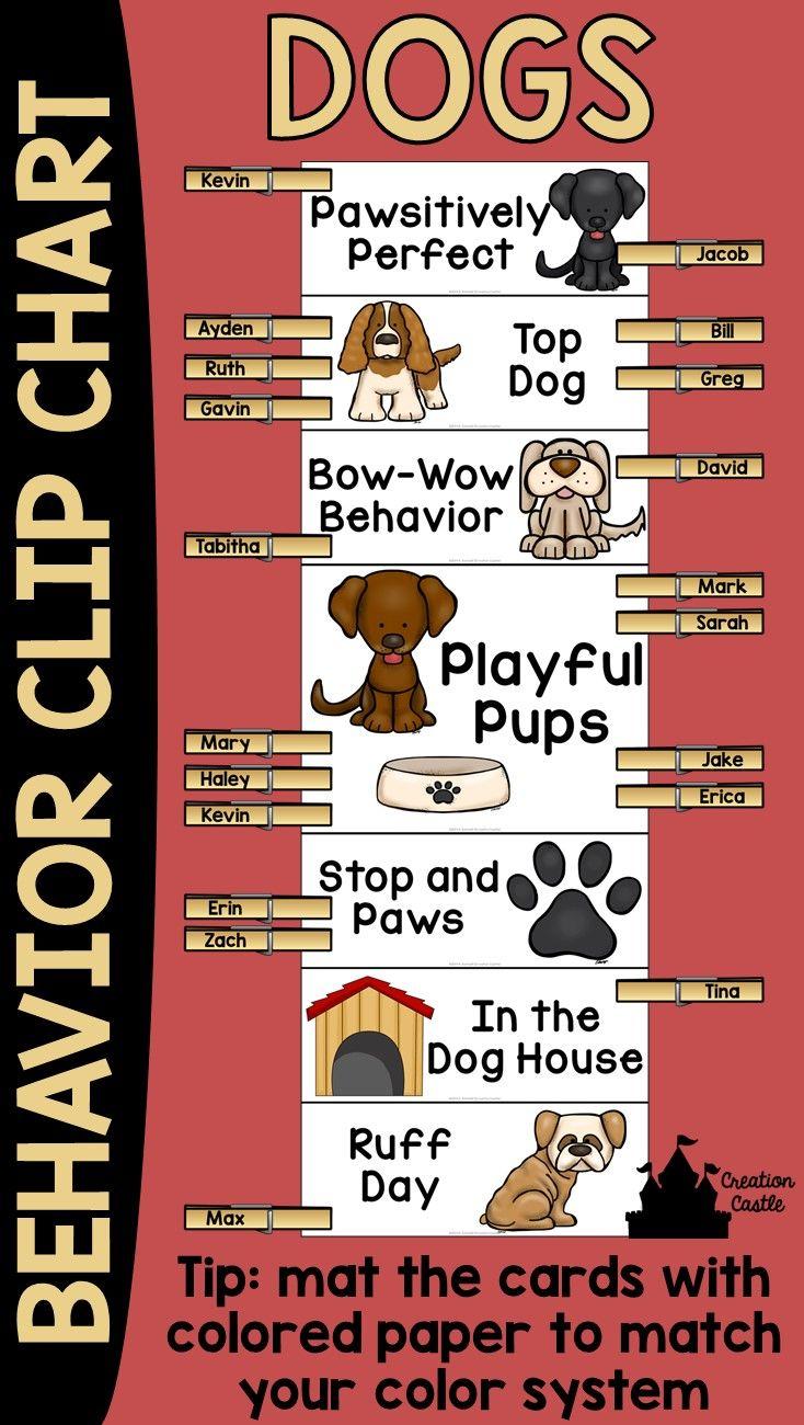 Behavior dog essay pet unusual